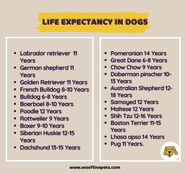 How Long Will Your Dog Live For? - Life Expectancy in Dogs