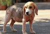 How To Treat Mange In Dogs With Household Remedies