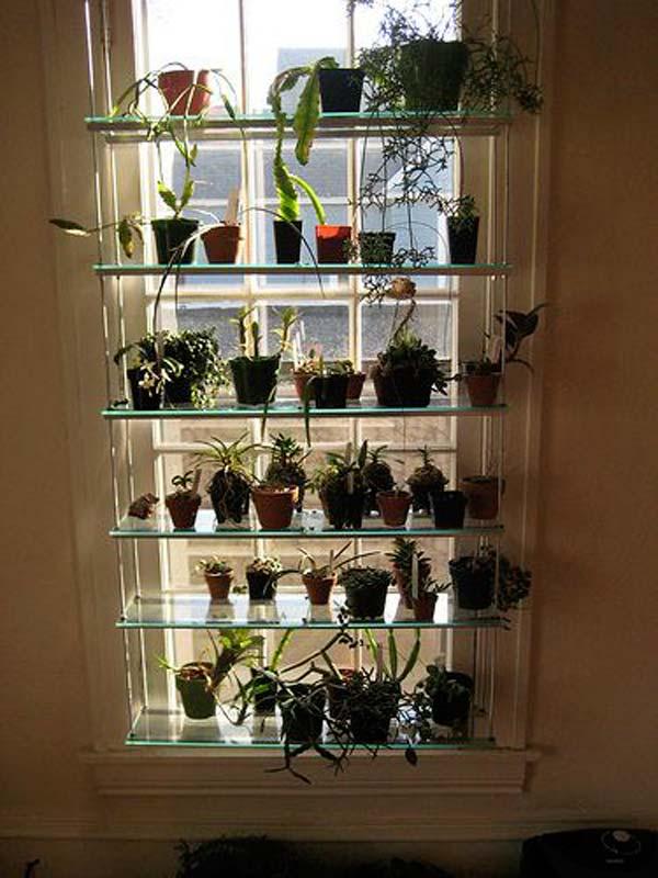Kitchen Garden Plants
