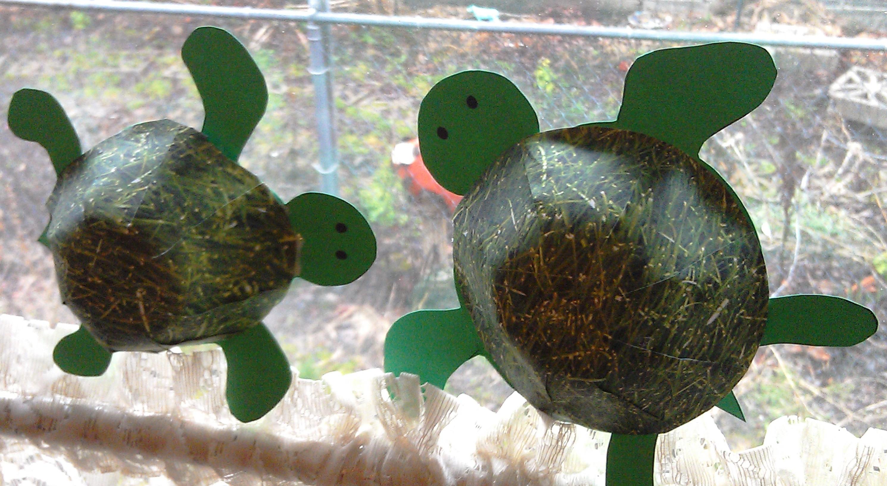 Cute 3d Turtle Craft