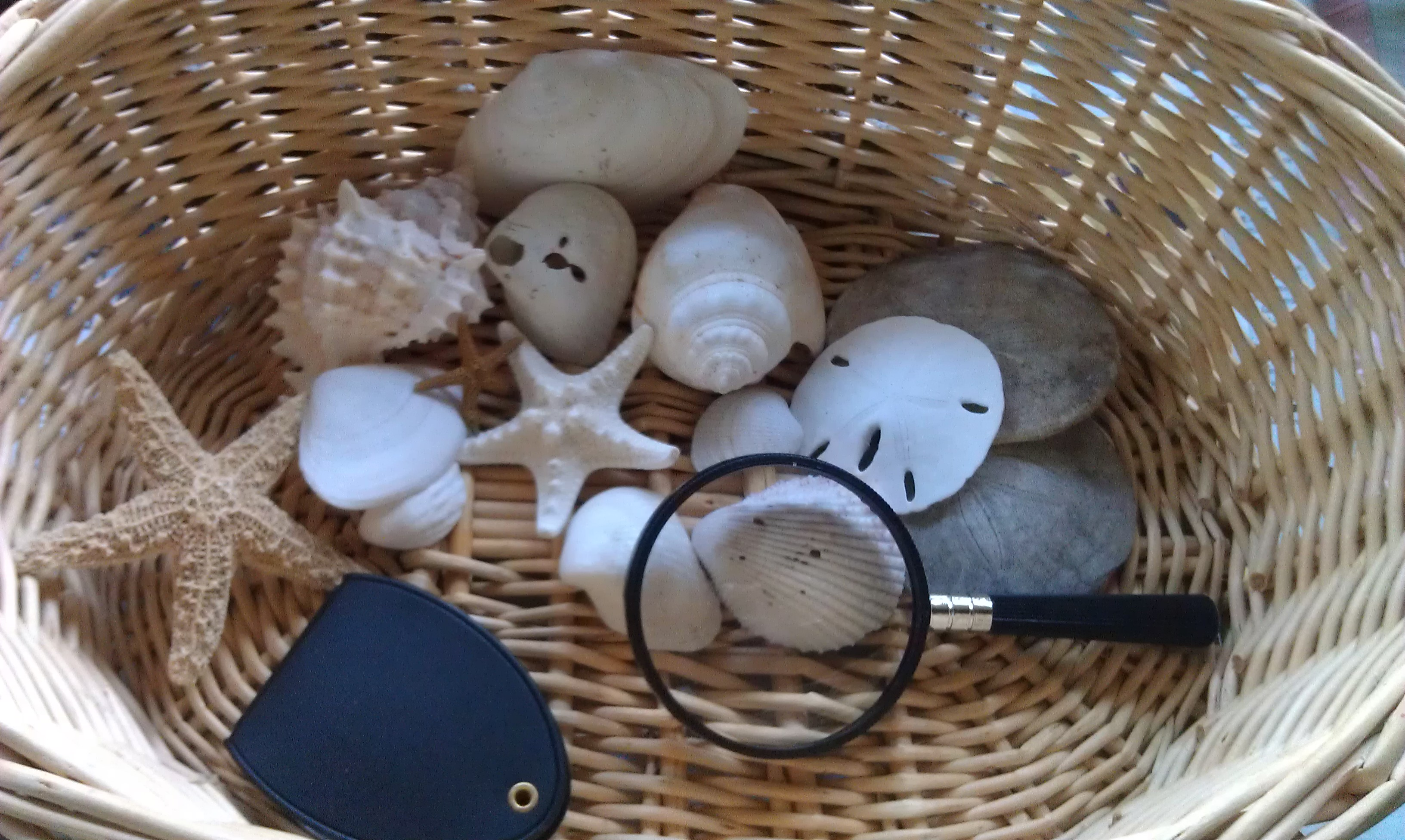Preschool Science Lesson Nature Observation Baskets