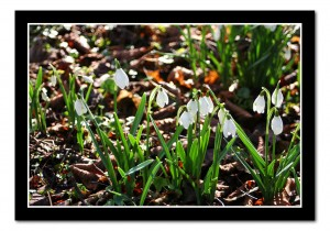 Today's two-forone. A nice bright fresh green and some Wintry snowdrops