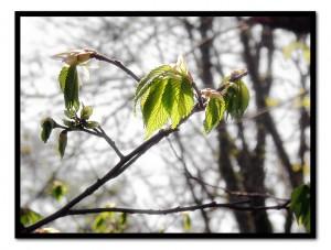 Tender - Spring Green