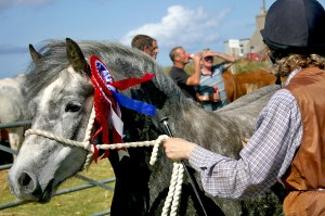 Shanty, best horse in show 2009