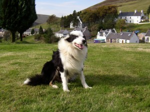 Griff in the garden at Wanlockhead