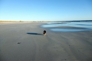Plenty of beach to keep the inquisitive canine sniffing