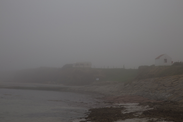 Brunhilde lurking in the fog at the Geo - early afternoon, believe it or not!