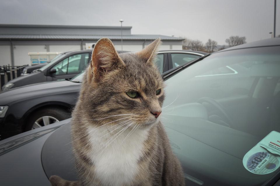 Tesco Cat