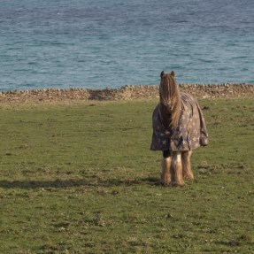 Horses still need their winter coats on