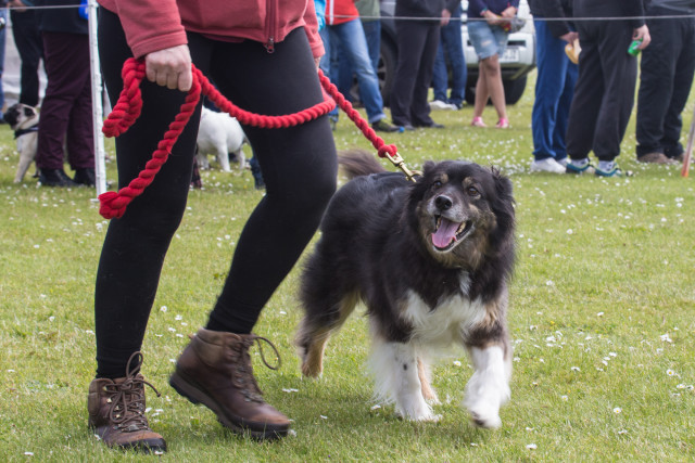 Tan at the Sanday Show