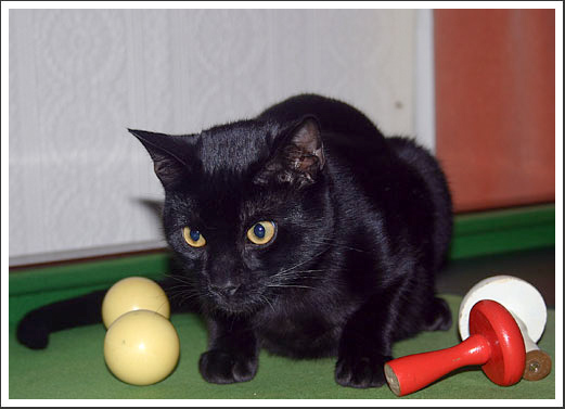 Treacle loved to help us play