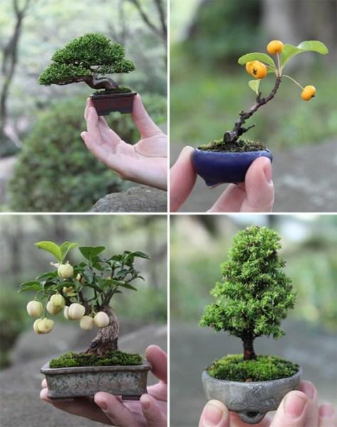 jonge bonsai boompjes
