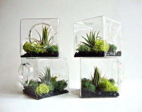 air plants via etsy