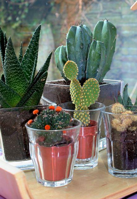 ons cactus tuintje