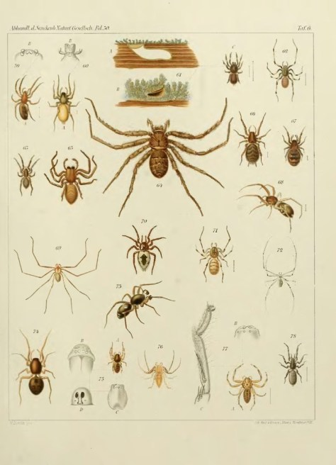 spinnenkaart