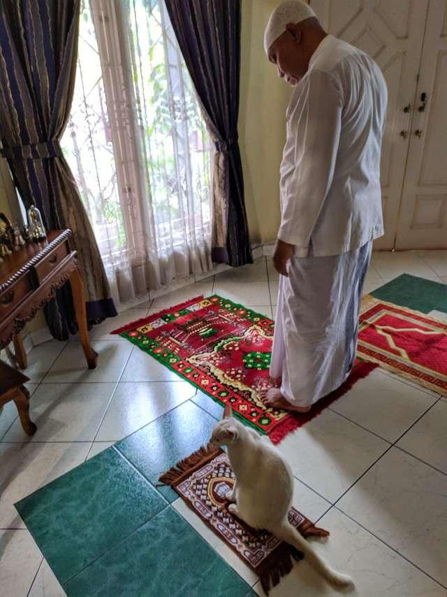 chat quand il peut prier