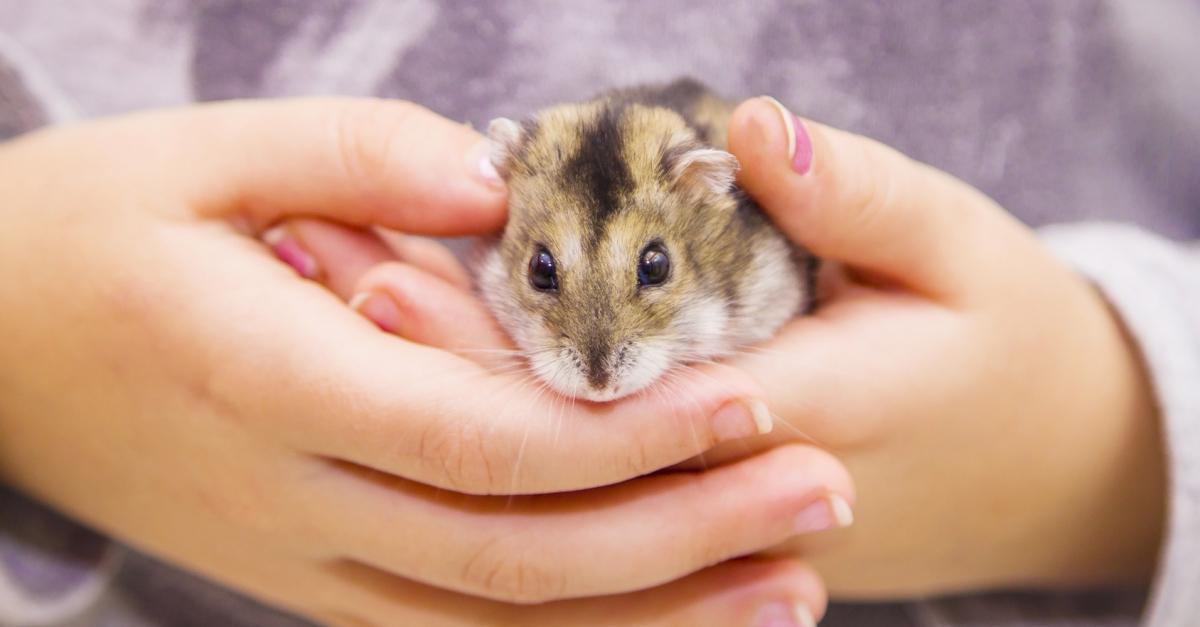 Hamsterblr Tumblr