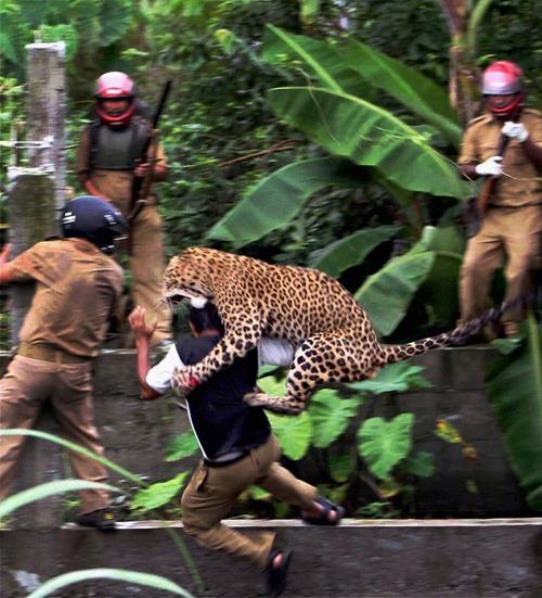 YE India Wildlife