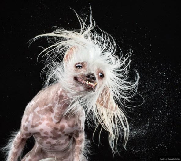 Foto de perro moviendo la cabeza