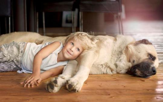 Foto de niño con su perro en casa