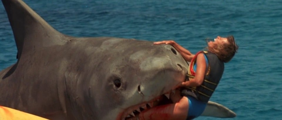 Jaws.jpg?fit=960%2C411&ssl=1