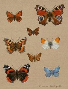 Hunting Butterflies Dreams