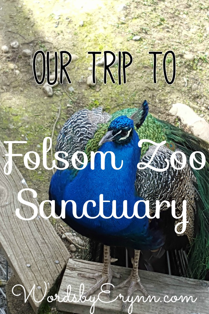 Folsom Zoo ... WordsbyErynn