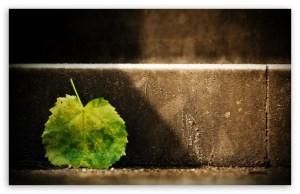 fallen_leaf_3-t2