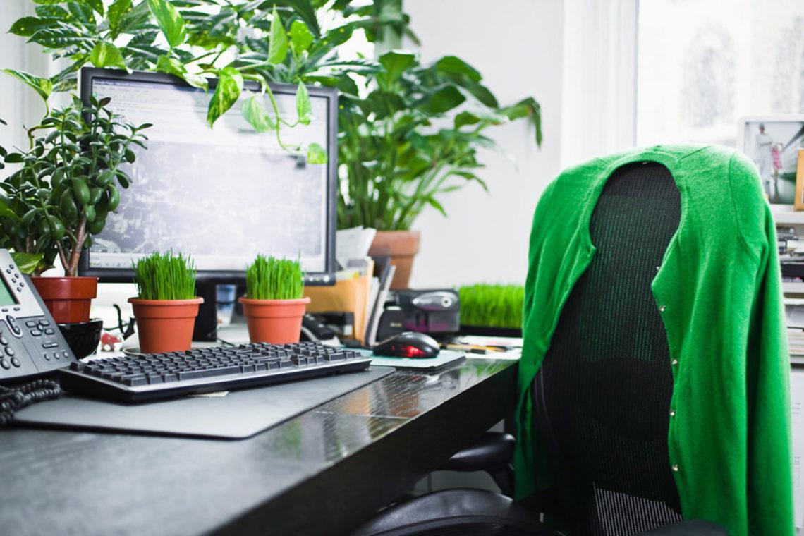 Piante da ufficio per migliorare l'ambiente di lavoro