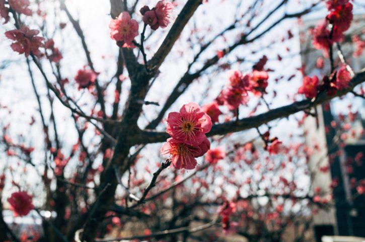 Shikata ga nai – cos'è e come metterlo in pratica