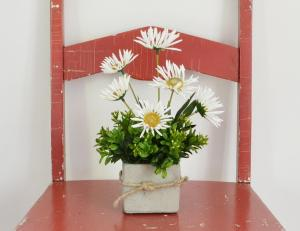 Lemon Leaf Market - Wildflower Daisies and Boxwood in a Cement Pot