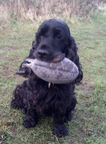 Bob with his Purple Partridge Dummy Sent in by Wendy L