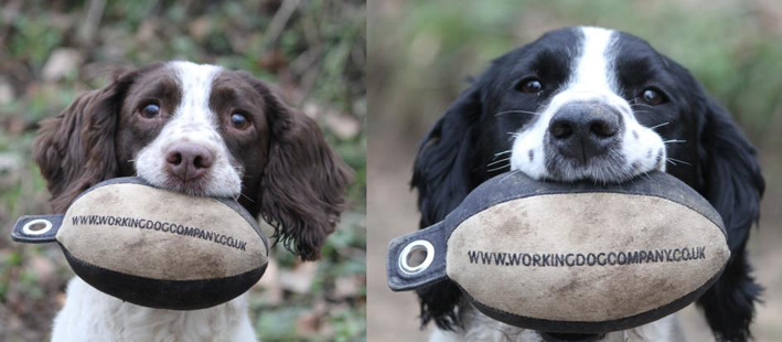 Two gorgeous spaniels proudly showing off their Easy-Mark dummies. Sent in by Rob