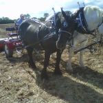 General Working Horse