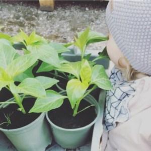 Unser Fräulein muss an jeder Pflanze riechen