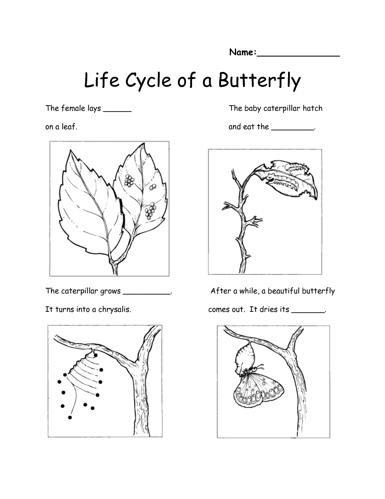Butterfly Sequence Worksheet