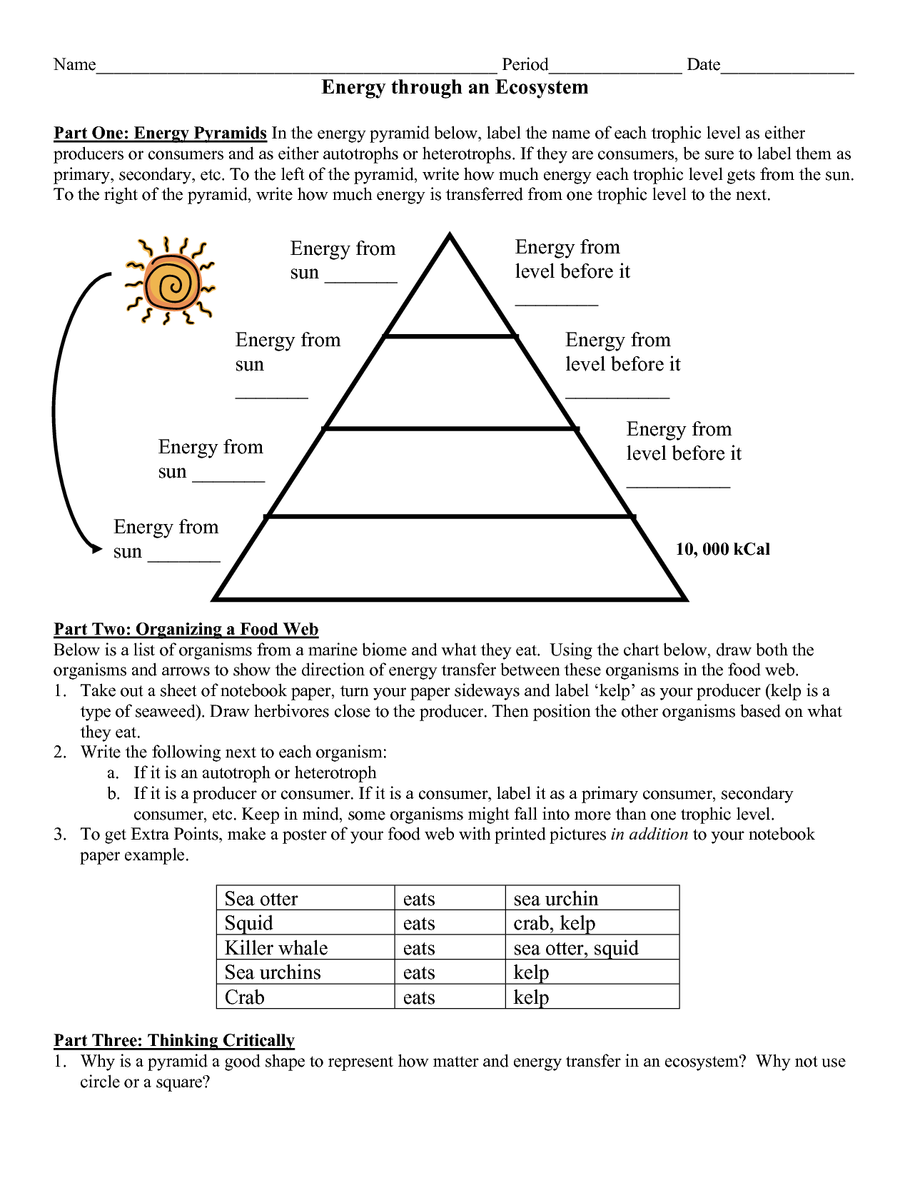 Levels Of Organization Worksheet Answers