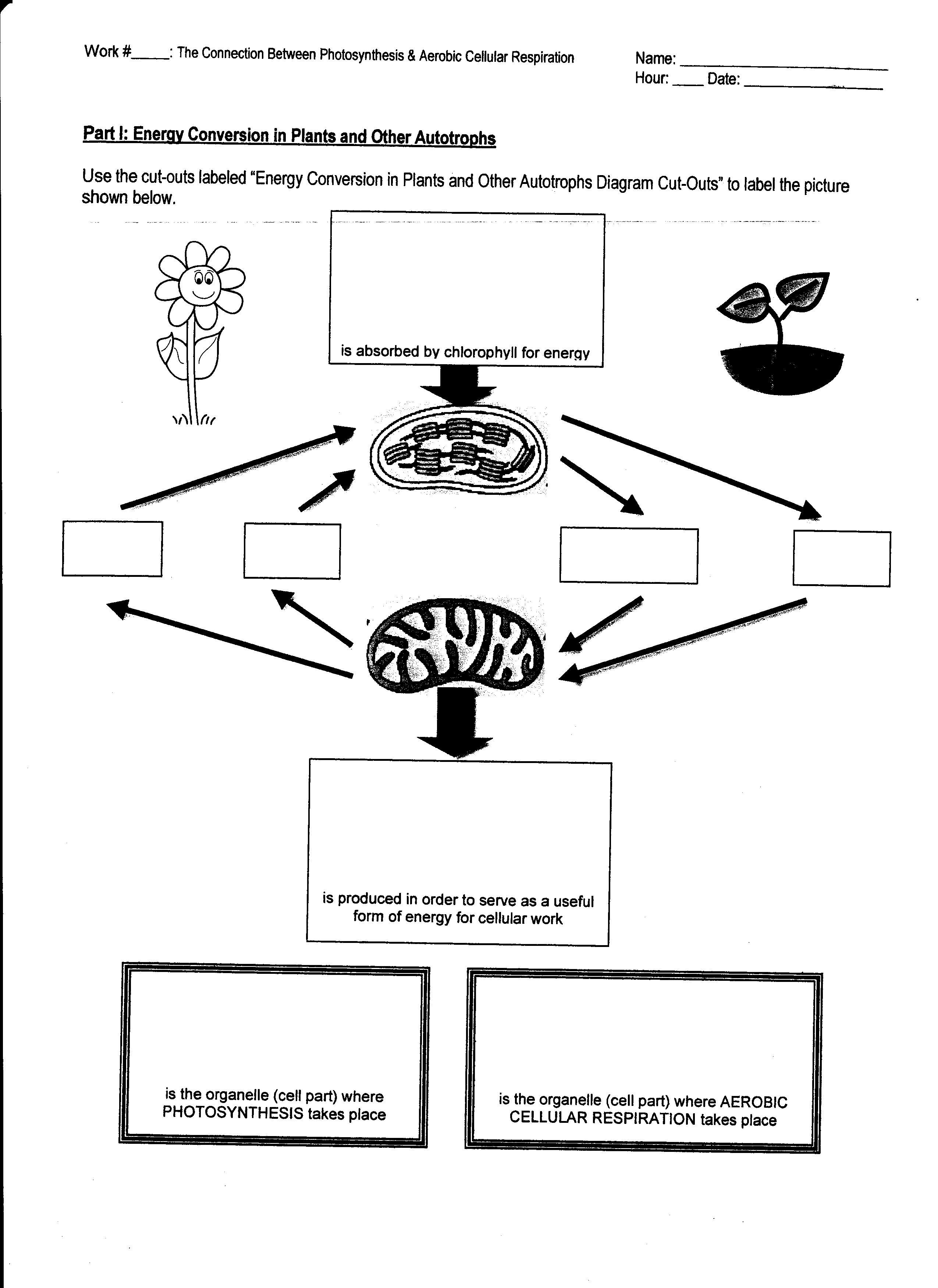 Jellyfish Labeled Worksheet Cut