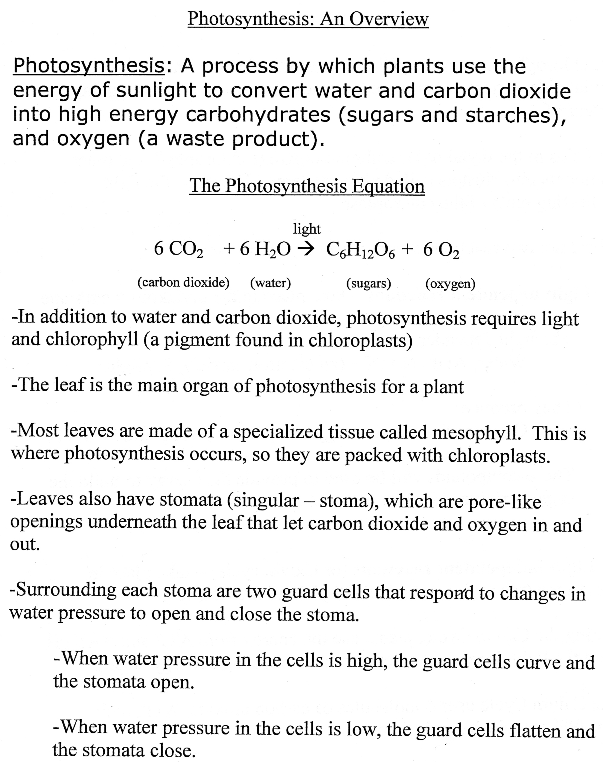 15 Best Images Of Plant Photosynthesis Worksheet