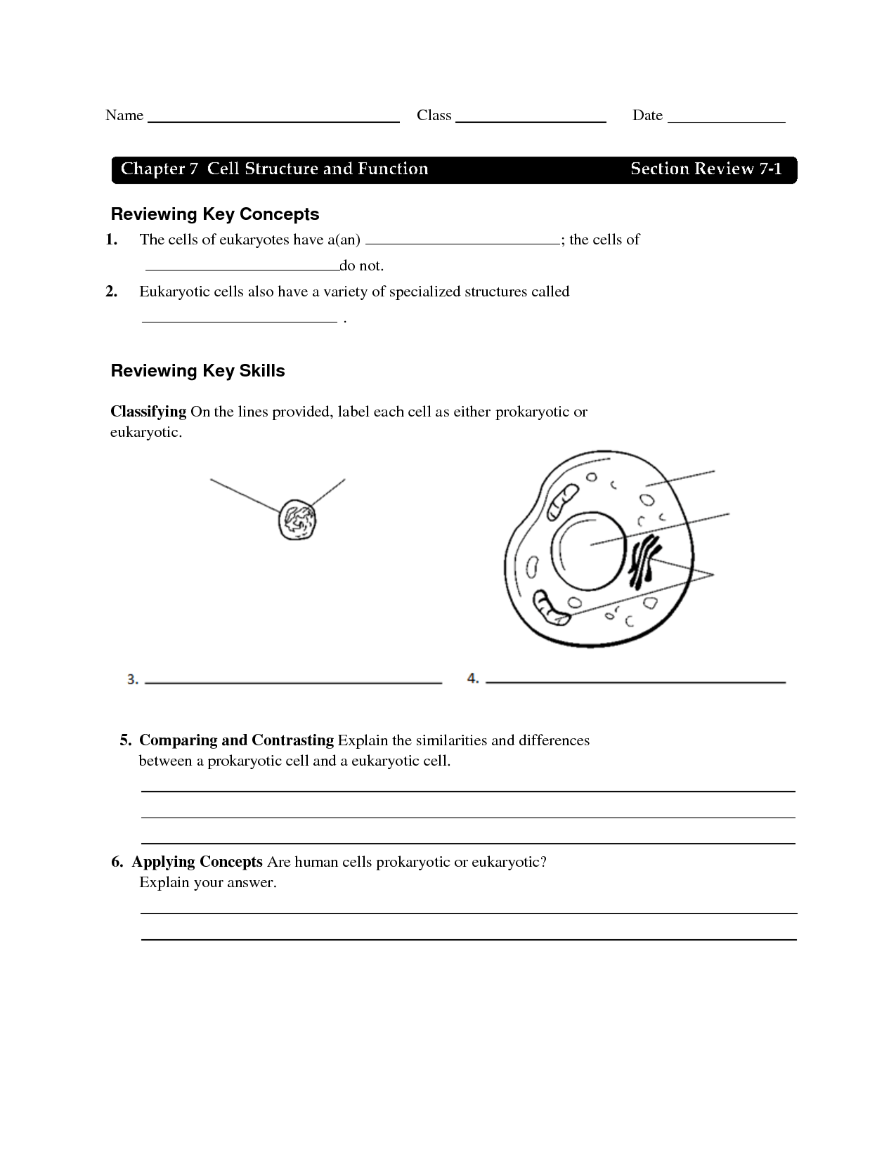 12 Best Images Of Plant Cell Review Worksheet