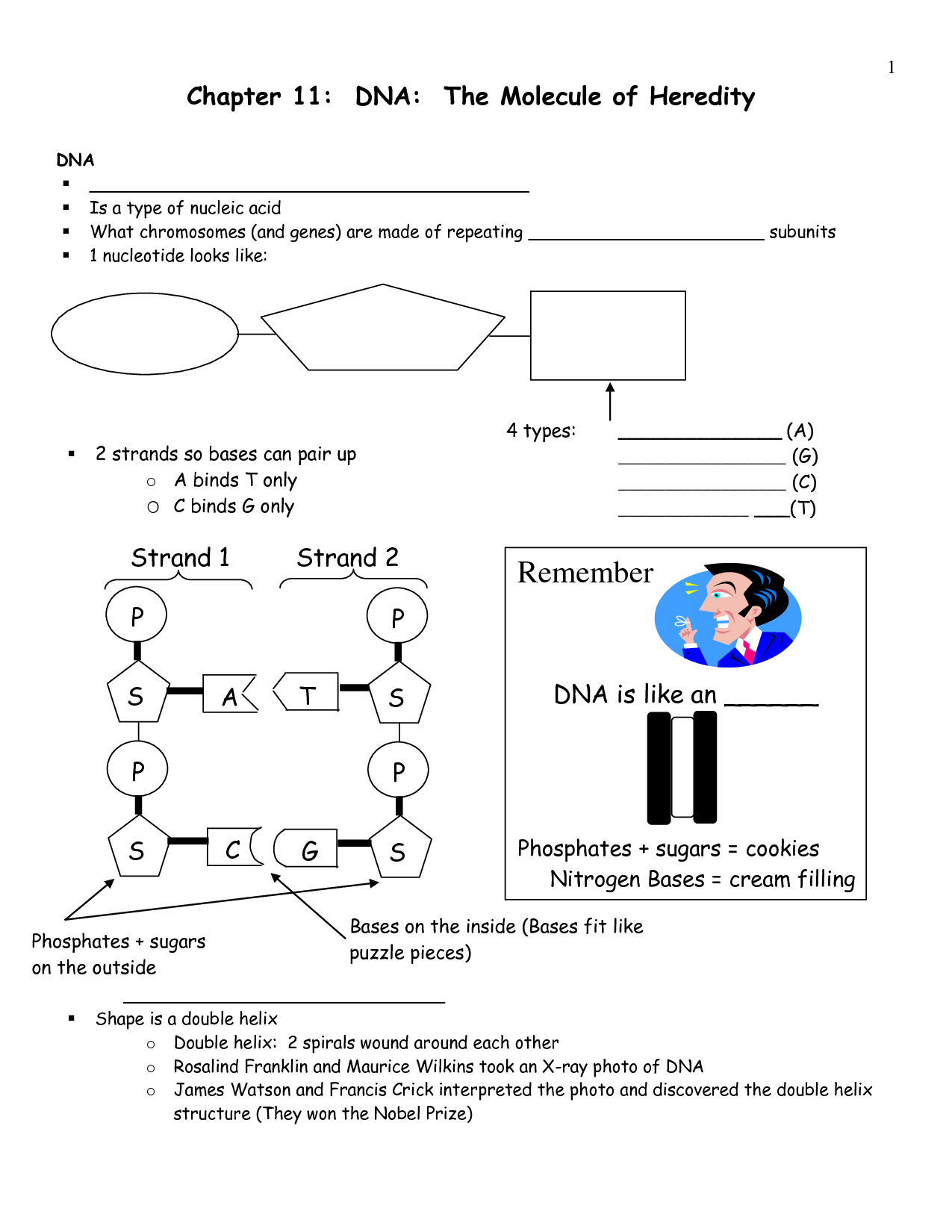 35 Dna Labeling Worksheet Answers