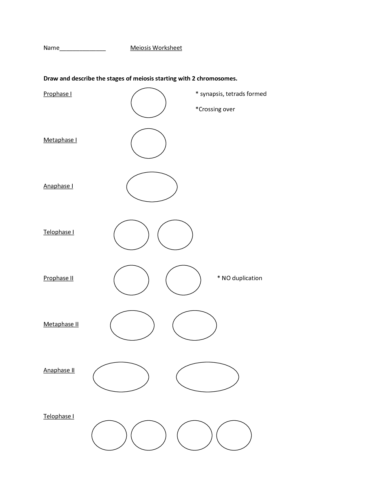 14 Best Images Of Mitosis Drawing Worksheet