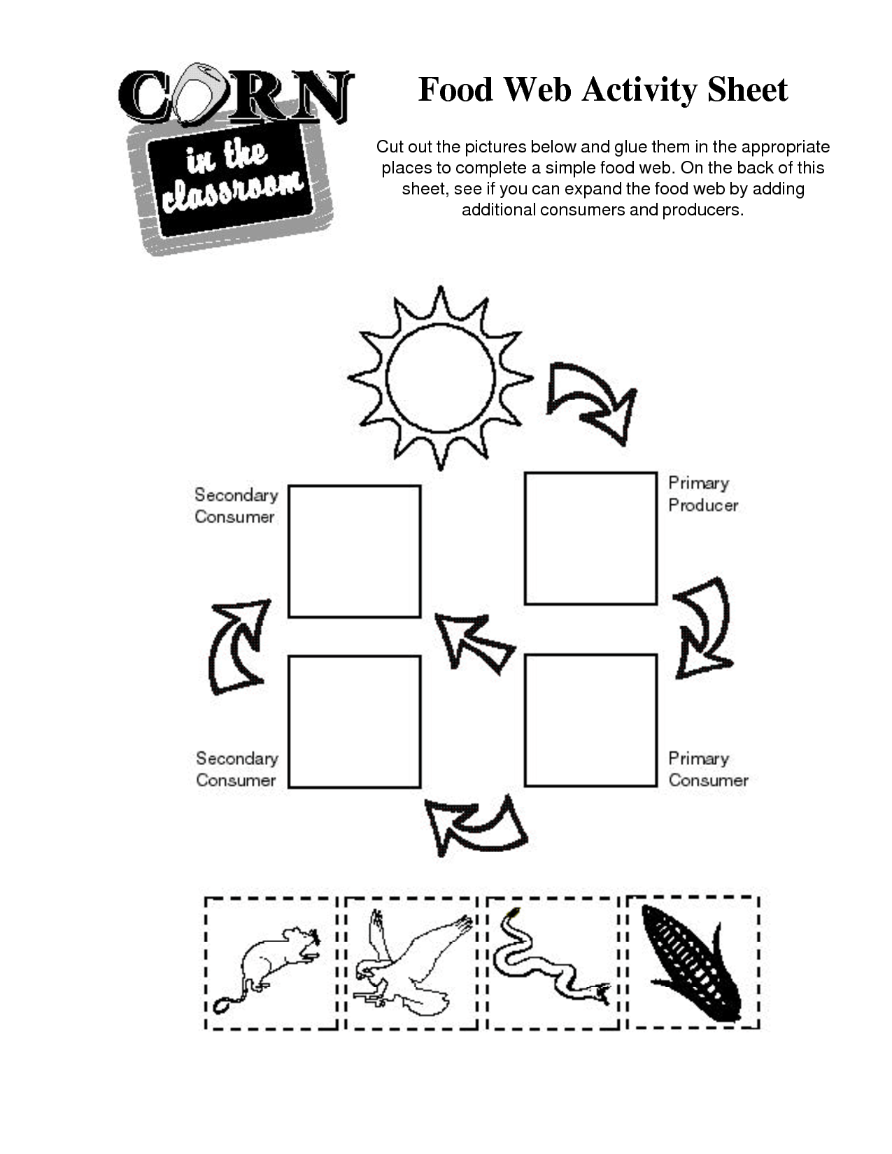 9 Best Images Of Food Chain Worksheets For Kindergarten