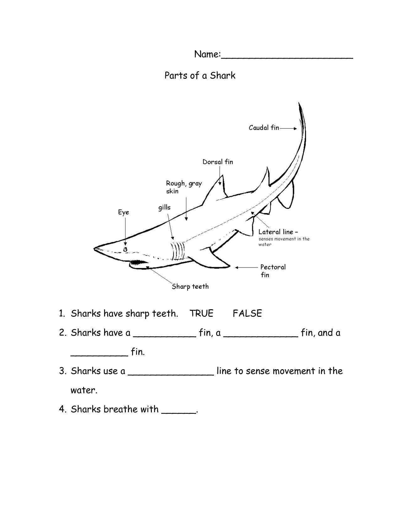 15 Best Images Of Sharks Worksheets Elementary