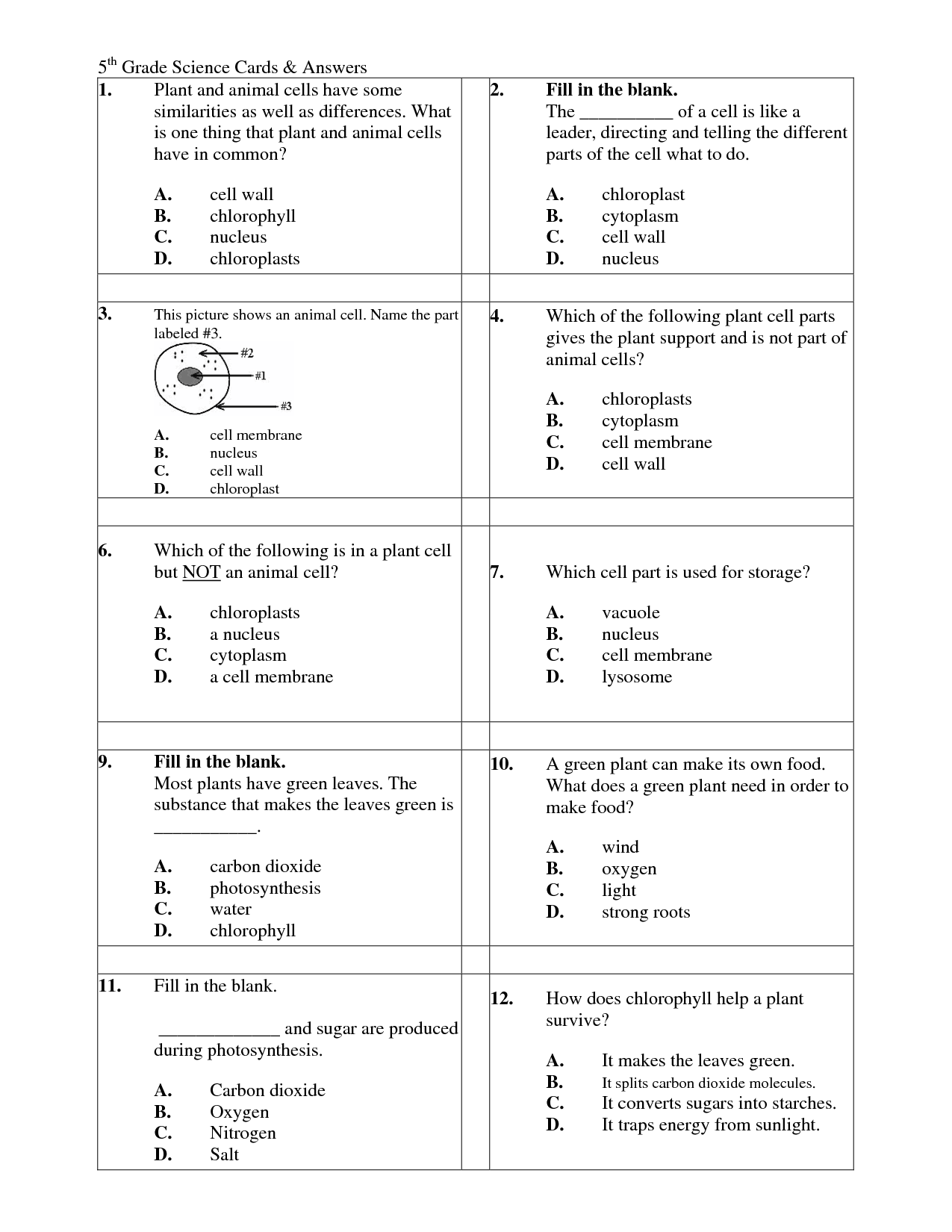 11 Best Images Of Cell Function Worksheets 6th Grade