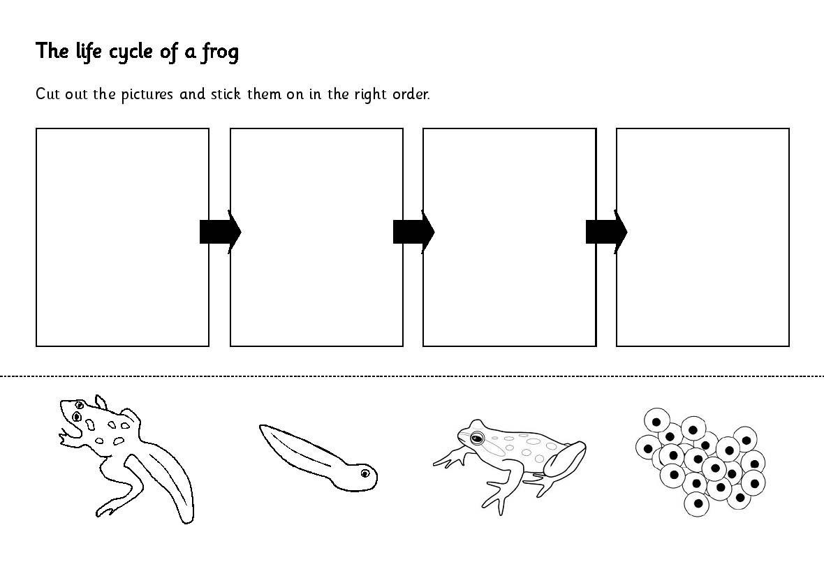 17 Best Images Of Sequencing Worksheets First Grade