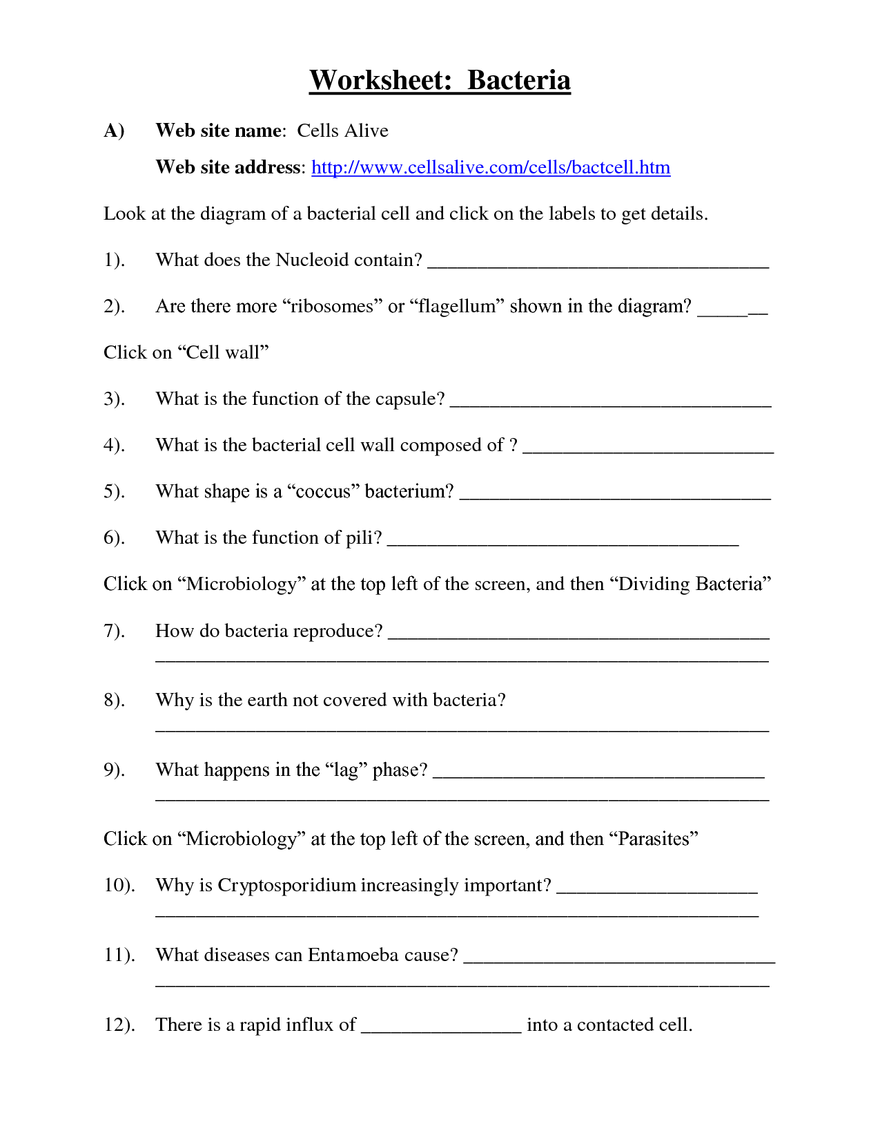 Microbes Worksheet Answers