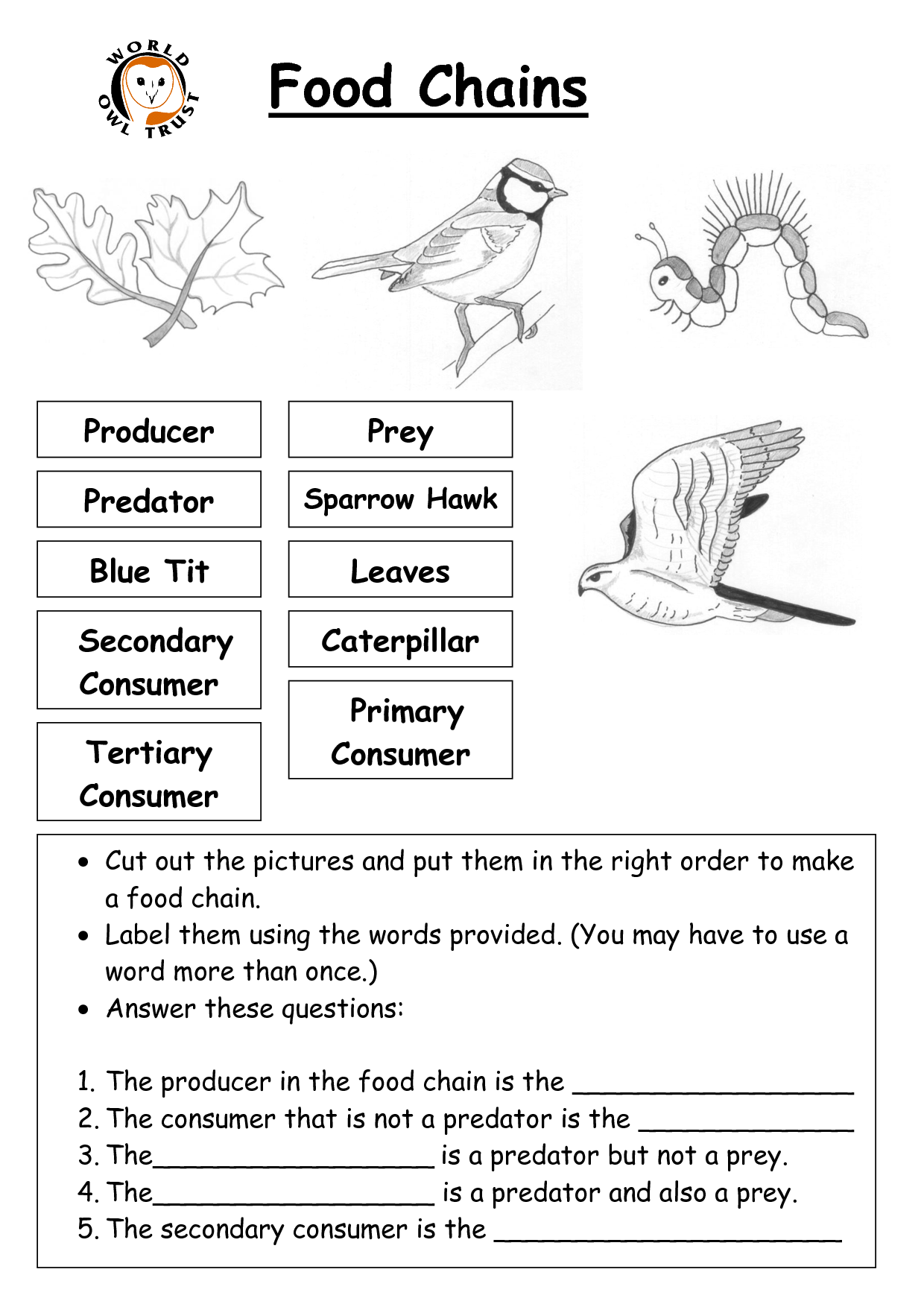 10 Best Images Of Ocean Food Chain Worksheets