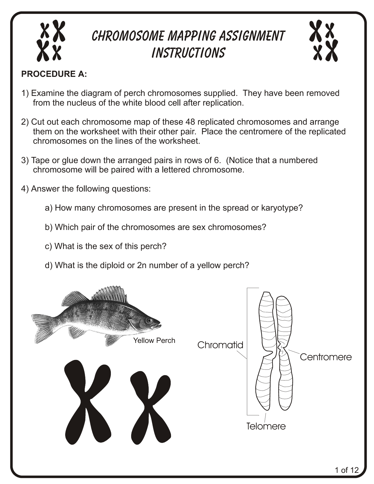 10 Best Images Of Chromosome Diagram Worksheet