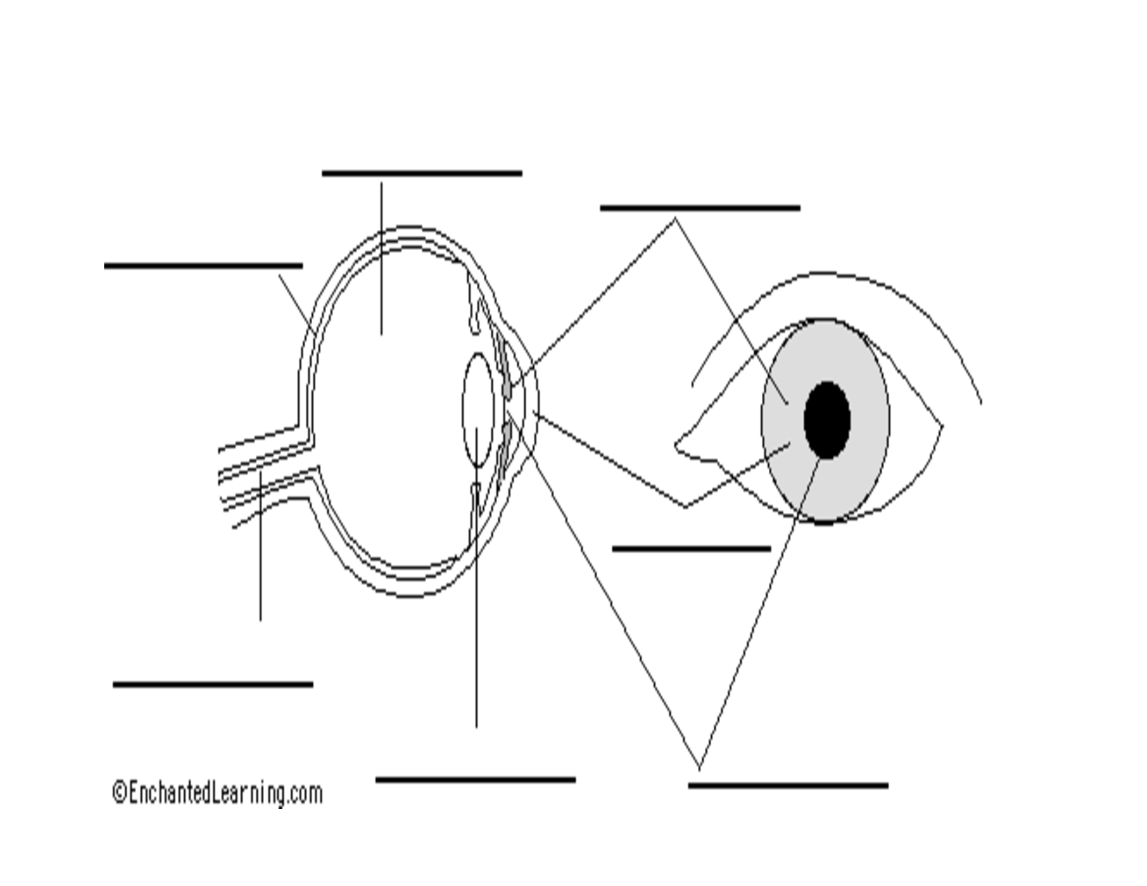 Worksheet For Parts Of The Eye